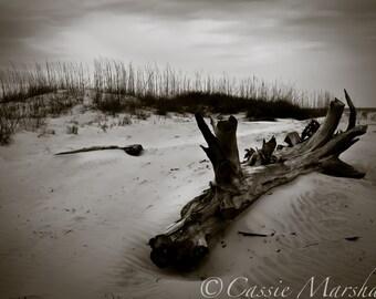 Driftwood.  Tybee Island, GA