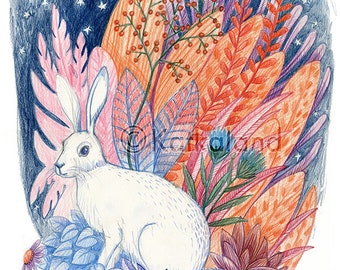 Rabbit and Flora - 8x10 PRINT, Hare, White Rabbit, Plants, stars, night sky, Art Illustration, Color Pencil Drawing,