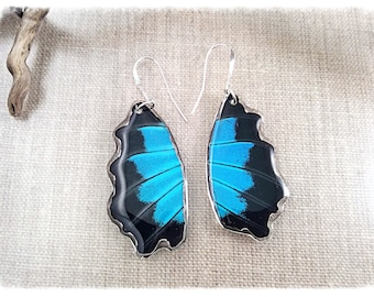 Real Butterfly Wing Jewelry; Butterfly Wing Earrings; Blue; Blue Emperor Swallowtail; Cobalt Blue; Insect Jewelry; Cut fanned out HIND Wing