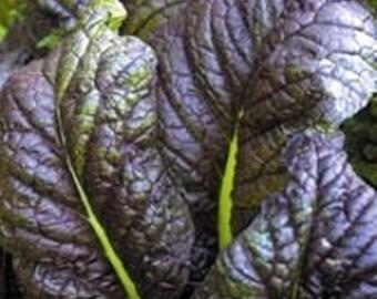 Osaka Purple Mustard Heirloom Garden Seeds Non-GMO 200+ Seeds Naturally Grown Open Pollinated Micro Greens Gardening