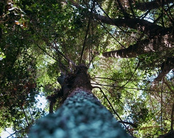 Up tree in nature