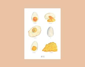 Æg - Eggs