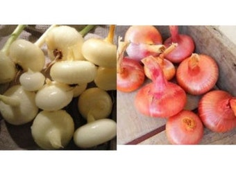 Red & Yellow Cippolini Onion Mix heirloom seeds