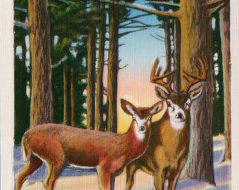 Vintage Linen Buck and Doe DEER in Woods Postcard