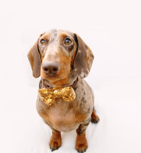 Dog Bow Tie || Cat Neck Tie || Bowtie for Kitty || Pet Bow Tie || Cat Costume