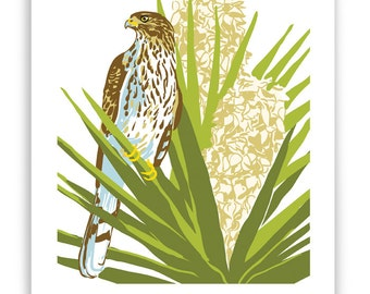 ART147: Cooper's Hawk in Flowering Yucca Art Reproduction