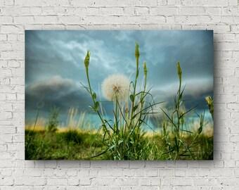 Dandelion Canvas, Dandelion Wall Art, Dandelion Decor, Botanical Wall Art, Nature Wall Art, Dandelion Wall Decor, Nature Wall Canvas