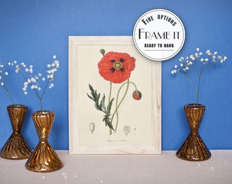 "Vintage illustration of poppy - framed fine art print, botanical art, home decor, 8""x10"" ; 11""x14"", FREE SHIPPING - 0015"