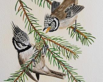 aquarelle originale,mésange huppée, animaux, naturaliste, art - oiseaux-bird-tit-art animalier
