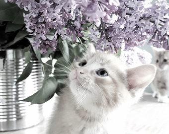 Lilacs & Kittens