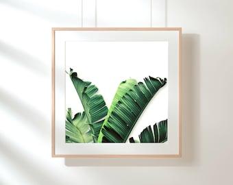 Square Banana Leaf Print, Tropical Wall Print, Banana Leaf Instant Wall  Print, Green