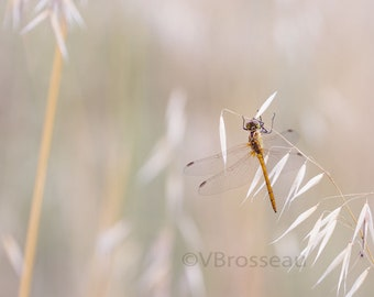 Photo nature in grass, nature decor, decor macro dragonfly, dragonfly