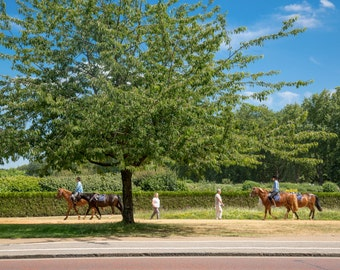 Hyde Park Print - London Photography - Horses