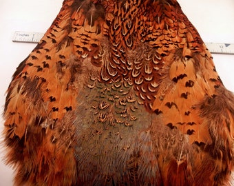 Feathers Ring neck Pheasant cape no wings no tail RPS-00 craft feathers fly tying feathers
