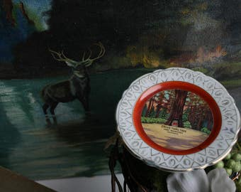 Plate, Giant Redwoods Drive Thru Tree, Souvenir Hanging Plate, California, Kitschy Collectible Plate