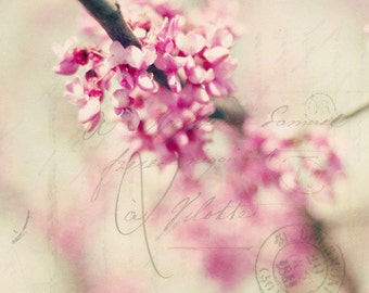 flowers, spring, pink,  blossoms, fine art photography