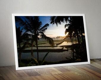 Coconut Palm and Beautiful Rice Fields, Bali Indonesia. Large Oversized Photo Artwork Landscape