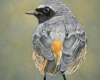 "Redstart bird Print 5x7 of watercolor painting 5"" by 7"""