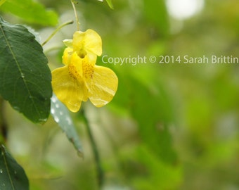 Snap Dragon - Nature Photography - Macro Photography - Fine Art Photography - Botanical - Flower - Floral