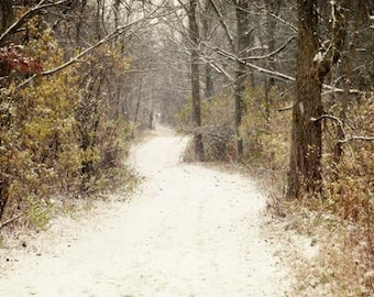 Winter Landscape Photograph path in the woods snow covered woodland picture - nature perserve perspective 8x12