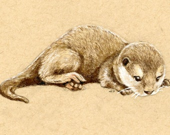 Baby Otter Art Print Colored Pencil