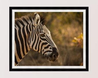 Zebra Portrait, Kruger, South Africa, Print, Wall Art, Home Decor