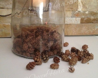 100 Baby Pinecones, hemlock pine cones, Miniature pinecones, Winter wedding decor, Woodland crafting