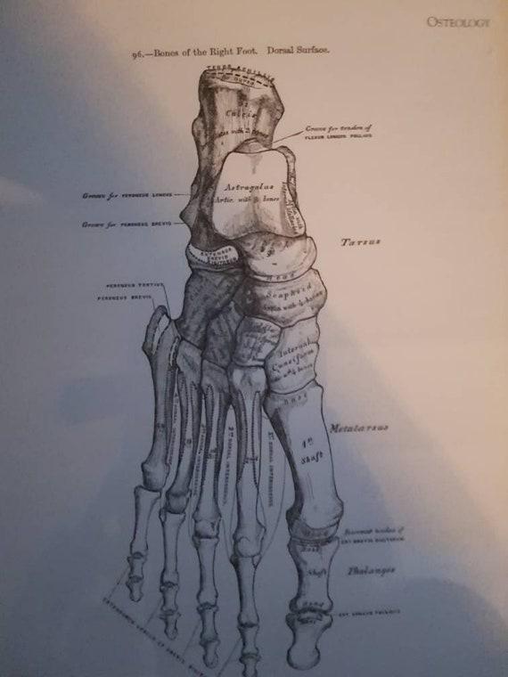 Menschlicher Fuß Anatomie Abbildung Rahmen drucken