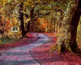 Autumn woodland trail.Digital download. Printable art. Instant download