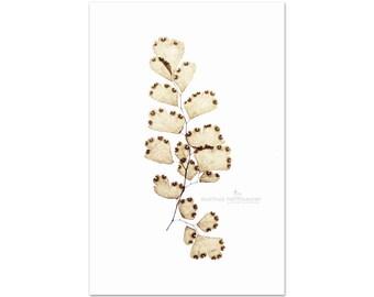 Fern Photography, Botanical Print, Neutral Wall Art, Plant Prints, Beige Decor, Vertical Art Print | 'Maidenhair Copper No. 1'