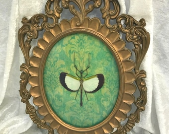 Stick Insect Vintage Frame