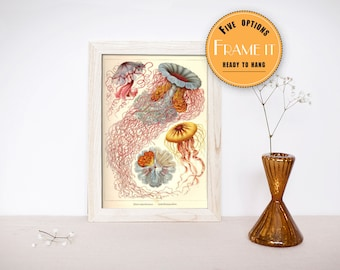 "Vintage illustration of jellyfish by Ernst Haeckel  - framed fine art print, sea creatures,sea life, home decor 8""x12"" 269"