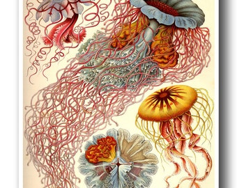 Colorful Jellyfish Print by Ernst Haeckel, Poster, Art Nouveau Print, Beach Decor, Coastal Wall Art, Jellyfish Art, Coastal Decor