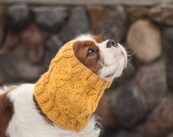 Small yellow dog snood //  ready to ship // for Cavalier King Charles Spaniel or similar // hand-knit 100% wool dog snood //