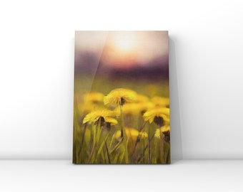 Field of Dandelions *Digital Download*