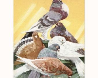 "Pigeon Art, Dove Print (Yellow Grey Decor, 1930s Home Office, Bird Nursery Wall Art, Deco Artwork) Farm Animals Print -- ""Blue Rock Doves"""