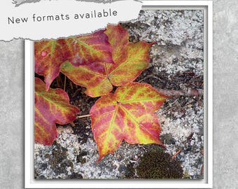 poster poster photography instant download printable Ivy leaves 5 X 5 8 X 8 10 X 10 12 X 12 15 X 15 16 X 16 18 X 18 20 X 20 30 X 30 50 X 50
