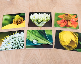 Summer Cool Color Photo Note Cards, Set of 6 Blank A2 Cards Featuring Flowers and Leaf with Water Droplet