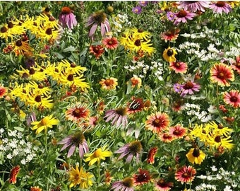 Serendipity's Midwestern Garden Wildflower Mix App 2500 seeds - Mix Lots of Color! Butterflies Love Cut Flowers Easy to Grow