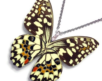 Real Butterfly Wing Necklace / Pendant (WHOLE Papilio Demoleus Butterfly - W119)