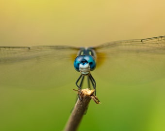 Dragonfly Photography, Nature Photography, Insect Photography, Wildlife Photos, Macro Photography, Blue Green