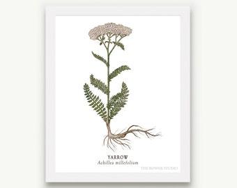 Botanical Yarrow Print - Unmatted