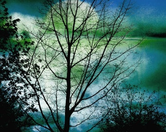 """Dark landscape photography full moon bare branches tree silhouette woodland nature - """"Into the blue"""" 8 x 10"""