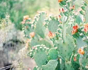 Cactus print, prickly pear cactus, desert photo print, Arizona print, Southwestern decor