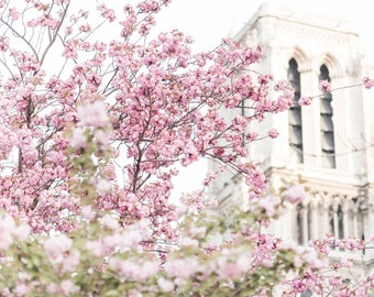 Paris Photography -  The Belltower of Notre Dame, April in Paris, Spring, Cherry Blossoms at Notre Dame, French Home Decor, Large Wall Art