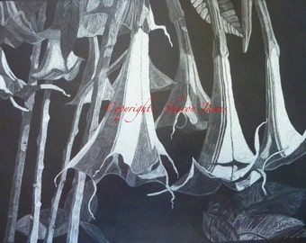 Angel's Trumpets-Original drawing by Sharon James
