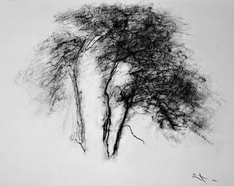 DRAWING charcoal on sketch paper, 30  x 37 cm, TREEs STUDY by Lionel Le Jeune, unique ARTwork