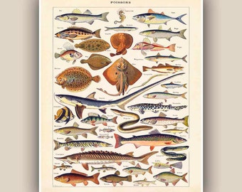 Fishes Print, educational sea life print, Vintage 'Poissons' image, Seaside Prints, Marine Wall Decor,  Nautical art beach cottage decor