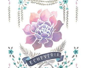 Echeveria Print, Echeveria Art Print, Succulent Illustration, Succulent Print, Succulent Fine Art Print