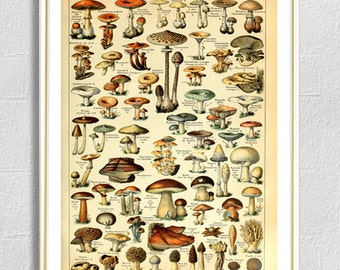 Mushroom print botanical print champignons vintage antique nature wall art decor home decor kitchen decor poster nature 8 x 12 x 16